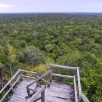 Vista desde La Danta El Mirador Peten foto por Rony Rodriguez de  150x150 - Galeria de Fotos de Guatemala por Rony Rodriguez