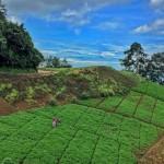 Zunil Quetzaltenango foto por Carlos Lopez Ayerdi 150x150 - Galeria de Fotos de Guatemala por Carlos Lopez Ayerdi
