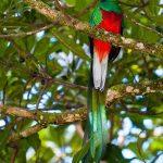 el quetzal 2 foto por luis burbano 150x150 - Galeria de Fotos de Guatemala por Luis Búrbano