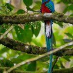 el quetzal 3 foto por luis burbano 150x150 - Galeria de Fotos de Guatemala por Luis Búrbano