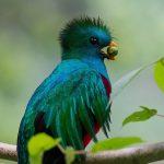 el quetzal 5 foto por luis burbano 150x150 - Galeria de Fotos de Guatemala por Luis Búrbano