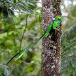 el quetzal foto por luis burbano 150x150 - Galeria de Fotos de Guatemala por Luis Búrbano