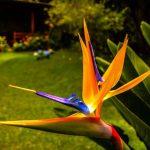 flor ave del paraiso foto por esau beltran marcos 150x150 - Galeria de Fotos de Guatemala por Esaú Beltrán Marcos
