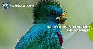 Galeria de Fotos de Guatemala por Luis Búrbano