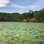 ninfas en rio dulce izabal foto por edgar monzon 150x150 - Galeria de Fotos de Guatemala por Edgar Monzón
