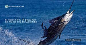 El mejor manto de peces vela del mundo está en Guatemala