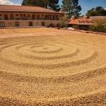 secado de cafe en la finca filadelfia la antigua guatemala foto por edgar monzon 150x150 - Galeria de Fotos de Guatemala por Edgar Monzón