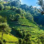 terraseado agricola en solola guatemala foto por esau beltran marcos 150x150 - Galeria de Fotos de Guatemala por Esaú Beltrán Marcos