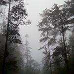 El bosque Nuboso con un agradable clima 150x150 - Guía Turística -  Sendero Ecológico La Maceta