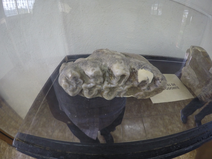 muestras de la mega fauna que hubo en Guatemala