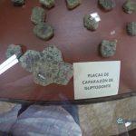 """partes del caparazon de un armadillo gigante 150x150 - Guía Turística - Sitio Paleontológico """"El Mamut"""""""