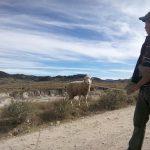pastores cuidando grandes reban cc 83os de ovejas en cuchumatanes 150x150 - Guía Turística -  Sendero Ecológico La Maceta