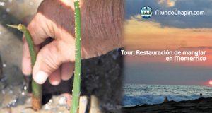 Tour: Restauración de manglar en Monterrico