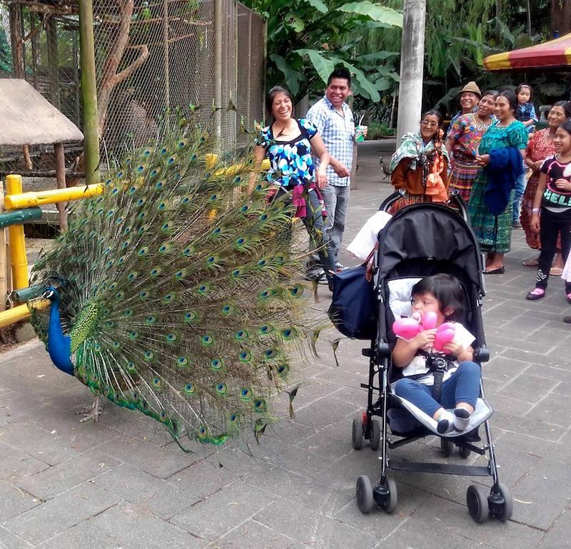 Familias disfrutando de IRTRA Petapa - foto por Raulin Contreras