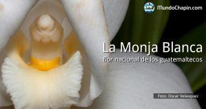 La Monja Blanca, flor nacional de los guatemaltecos