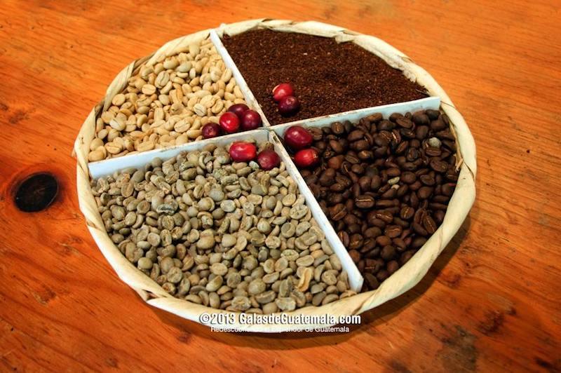 el cafe de guatemala en las diferentes etapas foto por maynor marino mijangos - Principales productos de exportación de Guatemala en 2015
