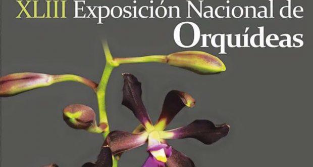 Exhibirán más de 1,500 especies de orquídeas