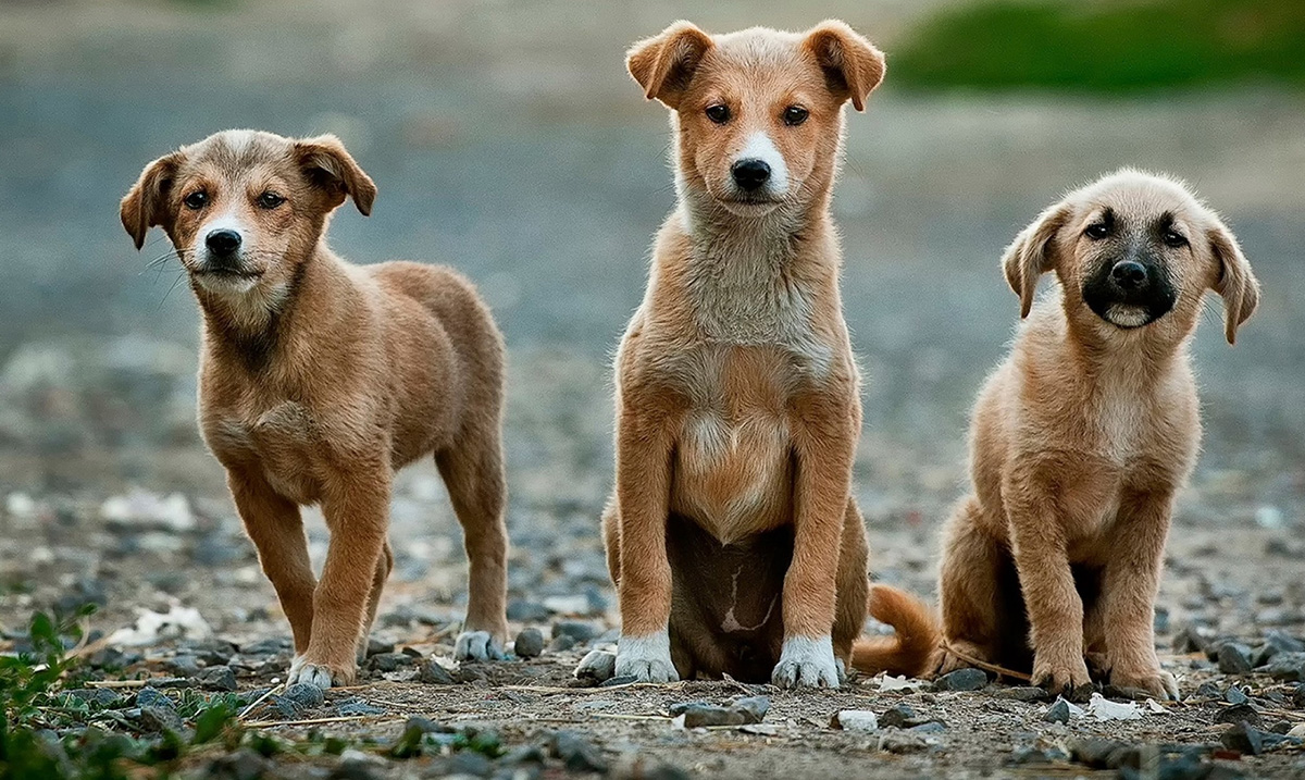 Ley de Bienestar Animal