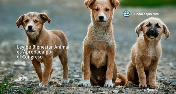 Ley de Bienestar Animal es Aprobada por el Congreso