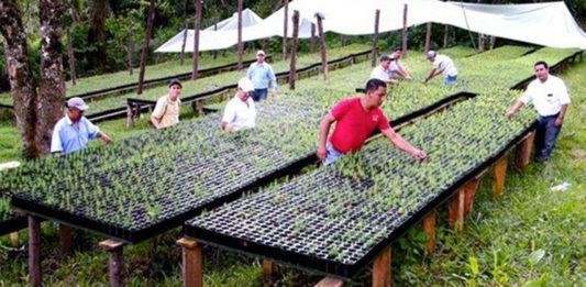 leyes-ambientales-en-guatemala-mundochapin