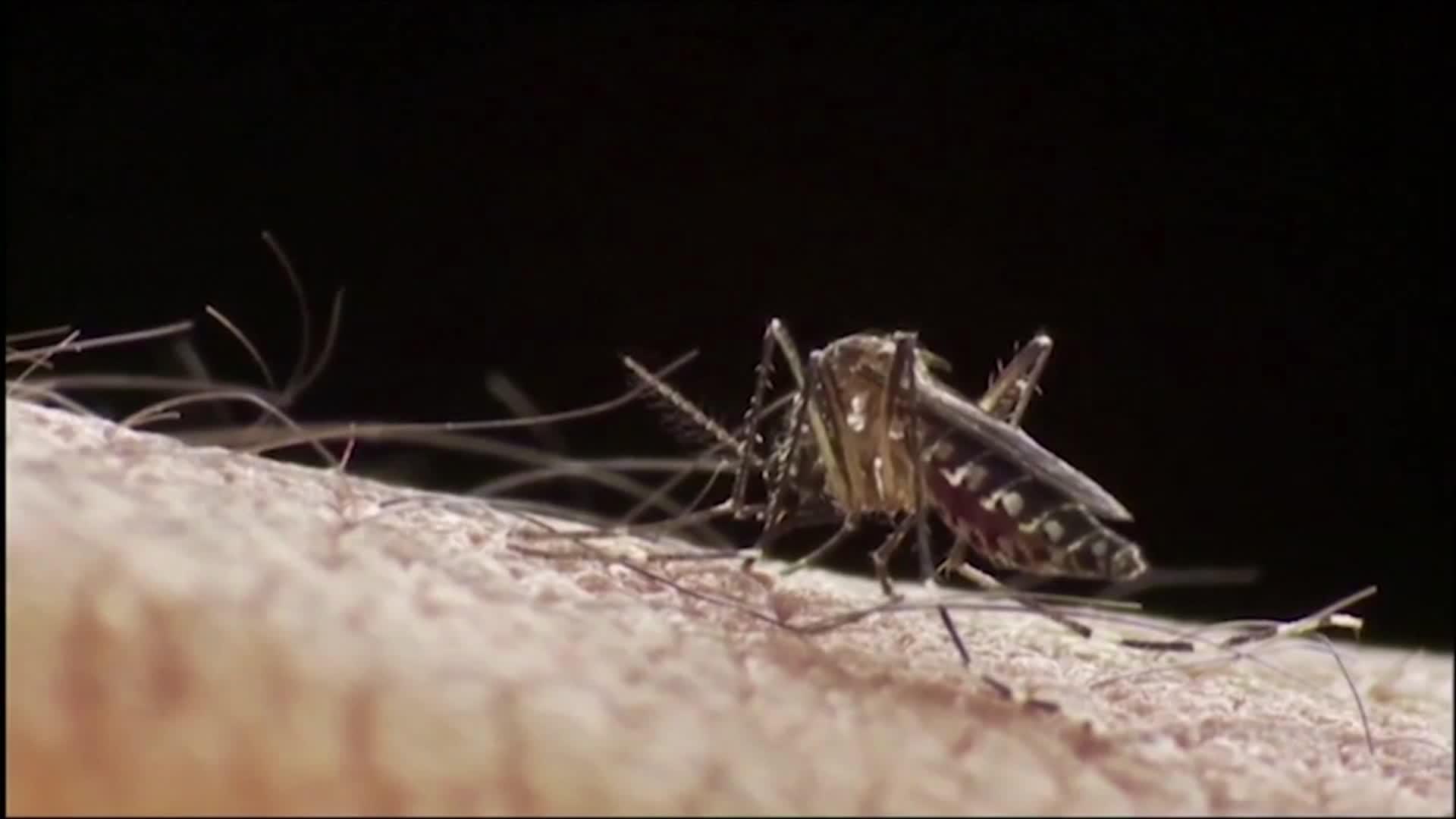 200128114804 dengue aedes aegypti fiebre amarilla pkg ignacio grimaldi 00004529 - Principales epidemias y pandemias que han afectado a Guatemala desde el siglo XVI