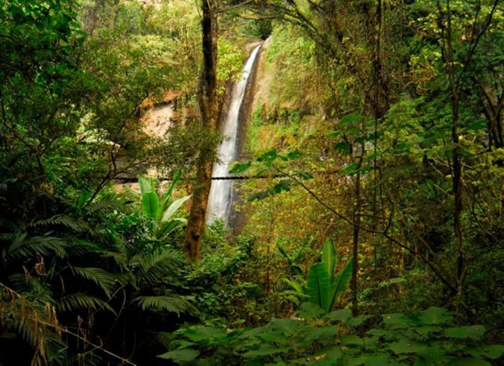 mariposario 1024x743 - 5 lugares que visitar en Sololá