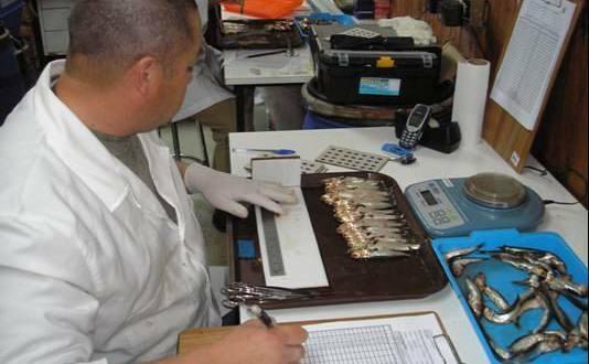 investigacion pesquera 534x330 1 - ¿Qué tipo de pesca existe en Guatemala?