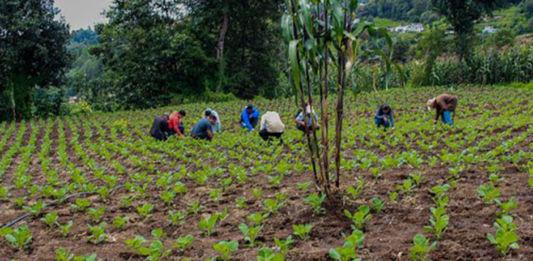 campesinos-mundochapin-guatemala