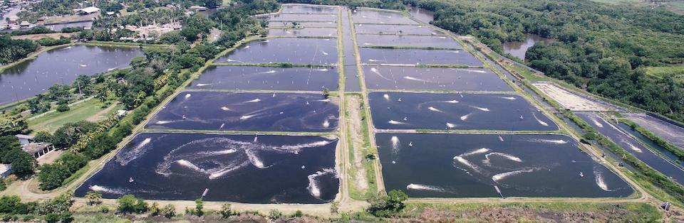 image complete button 5 5c6f4f42373ed - ¿Qué tipo de pesca existe en Guatemala?