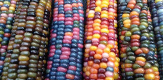 colores mayas 324x160 - Mundo Chapin